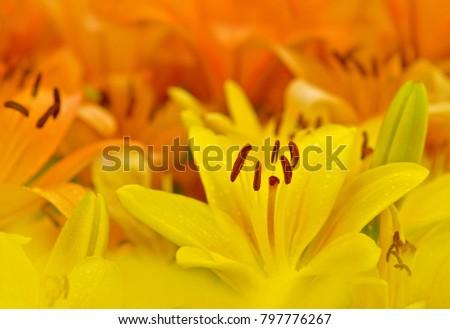 Bright bright lilies #797776267