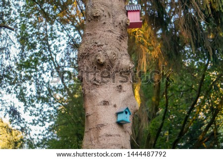 Bright colored birdhouses hanging on trees in a forrest. Stockfoto ©