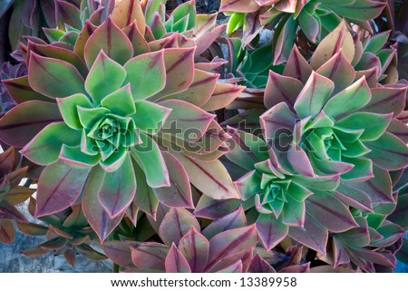 Bright Colored Cactus