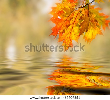 Bright colored leaves on the branches in the autumn forest.
