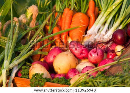 bright colorful display of various assorted fresh vegetables from the garden