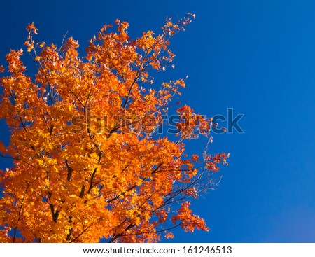 Bright colorful orange fall tree leaves on blue sky background