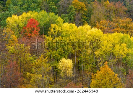 Bright colors of autumn foliage in Stenki-Izgorya site of Belogorie protected area in Belgorod region, southern Russia
