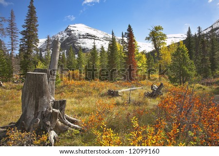 Bright colors of autumn in glacial reserve in the north