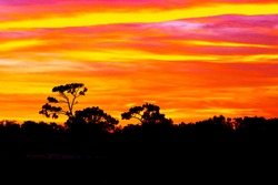Bright dramatic brilliant colorful sunset sky horizontal stratus clouds and tree tops selective focus watercolor effect