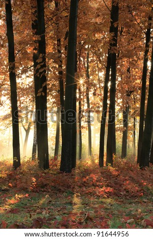 Bright early sunshine in the autumn forest