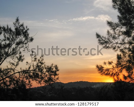 Bright evening glow at sunset with pine branch in sun back light. Jinja, Uganda, Eastern Africa.