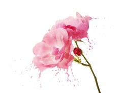 bright flower with pink splashes on black background