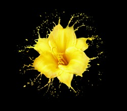 bright flower with yellow splashes on black background
