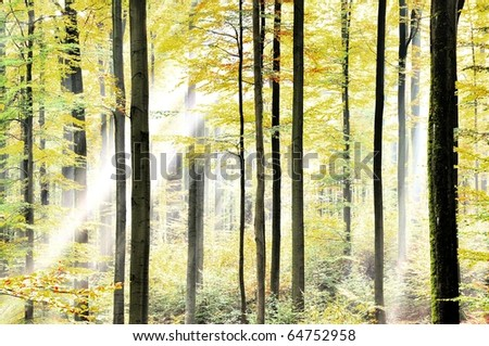 Bright fresh forest with sunbeams