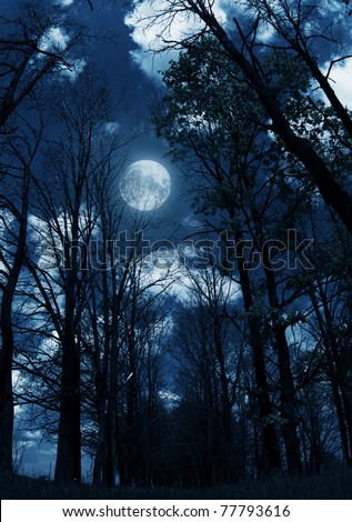 bright full moon behind some tree branches