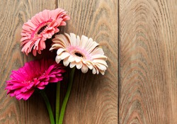 Bright gerbera flowers on a old wooden  background. Frame of flowers, top view
