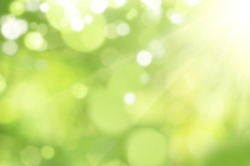 Bright glowing green nature background in the form of bokeh
