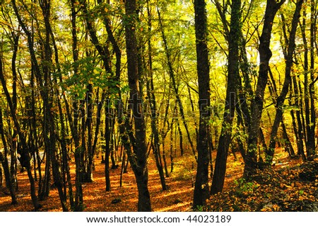 bright golden autumn in the forest