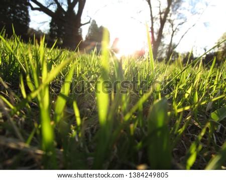 Bright grass glistens in the sun