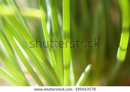 bright grass in the spring sunshine