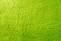 Bright green abstract artificial leather texture. Imitation of yellow-green scales.