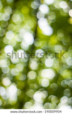Bright green and white blur bokeh abstract light background