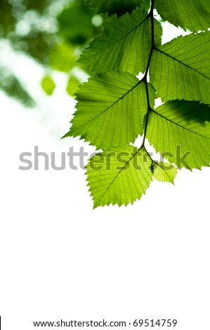 Bright green branch on the sky background