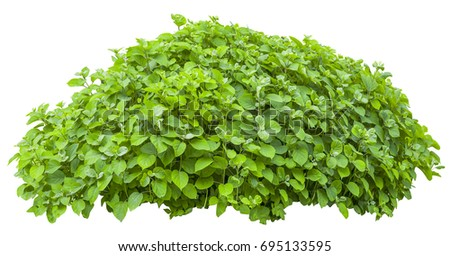Bright green bush isolated on white background #695133595