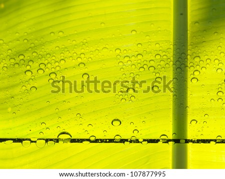 Bright green ecology background.