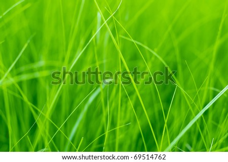 Bright green grass background