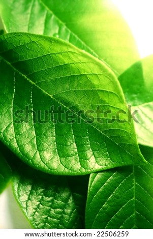 bright green leaves #22506259