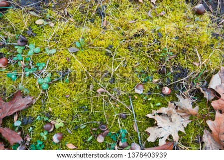 bright green moss cover black soil, some green clover plants, autumn meadow, seasonal conceptual flat lay background texture photo #1378403939