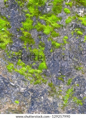 Bright green moss on an old rock surface