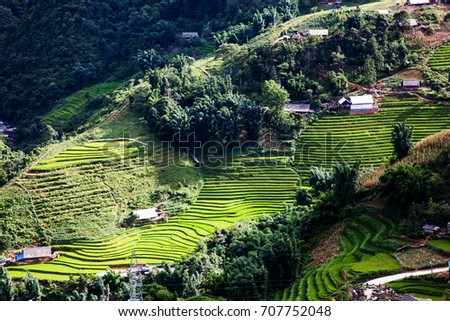 bright green rice fields during summer around Cat Cat village, Sa Pa, Lao Cai, Vietnam #707752048