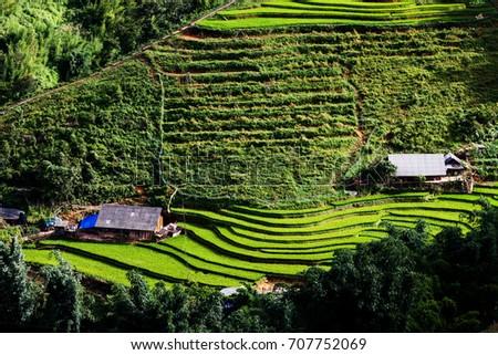 bright green rice fields during summer around Cat Cat village, Sa Pa, Lao Cai, Vietnam #707752069