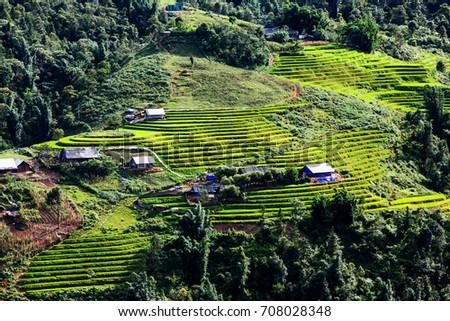 bright green rice fields during summer around Cat Cat village, Sa Pa, Lao Cai, Vietnam #708028348