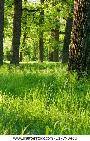 Bright green spring nature in the rays of the rising sun #117798460