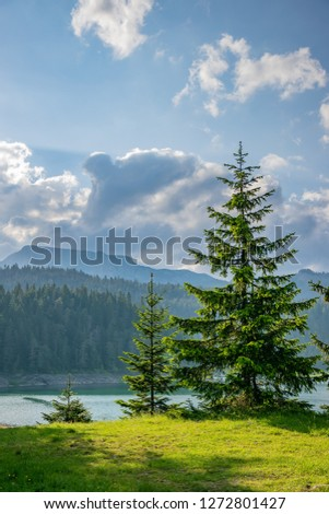 Bright green spruce grows on the shores of the mountain lake. #1272801427