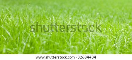 bright green sunny grass. small GRIP #32684434