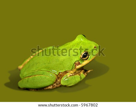 Bright green tiny tree frog isolated over related color