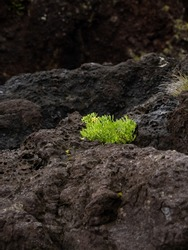 Bright green vegetation surrounded by dark volcanic rock in the bathing area of Boqueirão. Santa Cruz das Flores, Flores Island.