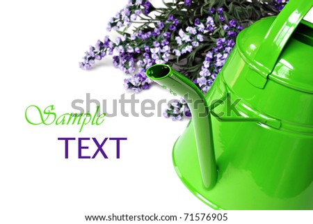 Bright green watering can with lavender flowers on white background with copy space.  Macro with shallow dof.  Selective focus on spout.