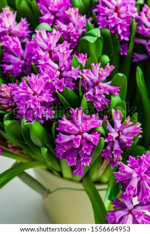 bright hyacinth flowers in the vase