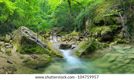 Bright jungle with river. Natural landscape