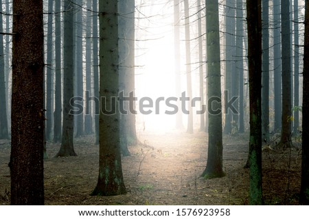 Bright light at the end of pathway through mysterious dark foggy spruce forest among high trees.