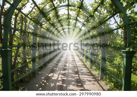 Bright light in the end of green tunnel, road to heaven or clarification #297990980