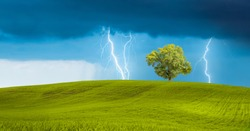 Bright lightning hit the tree with green grass field - Stormy sky with thunderbolt over rural landscape