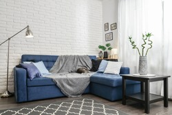 Bright living room in scandinavian style with blue couch, decorative pillows, white brick wall and white curtains. Design interior concept.