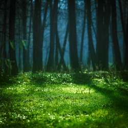 Bright meadow in summer forest