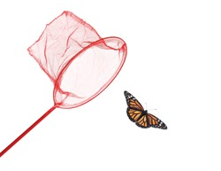 Bright net and beautiful fragile monarch butterfly on white background