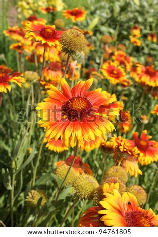 bright orange and yellow bremen flower patch