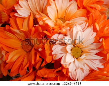 Bright orange daisy #1326946718