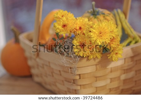 Bright orange pumpkin, gourds and yellow mums in basket on old wood farm table by window selective DOF selective focus for Halloween Thanksgiving