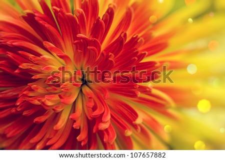 Bright orange-red flower close up